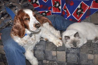 Tinker and Bartimaeus - Best of friends!