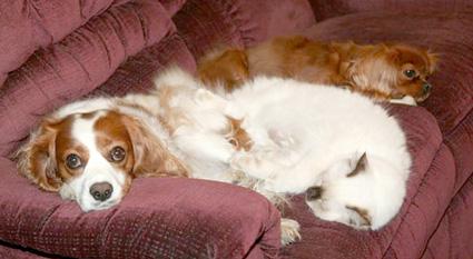 Annie and her buddies!