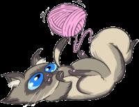 cat-n-yarn