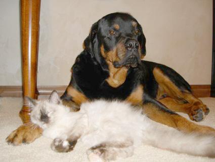 Cat & Dog!